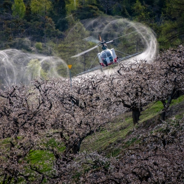 Prochaine application sur abricotiers jeudi 2 avril 2020